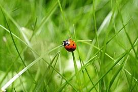 ladybug-796481__180