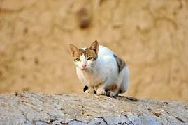 cat-72568__180